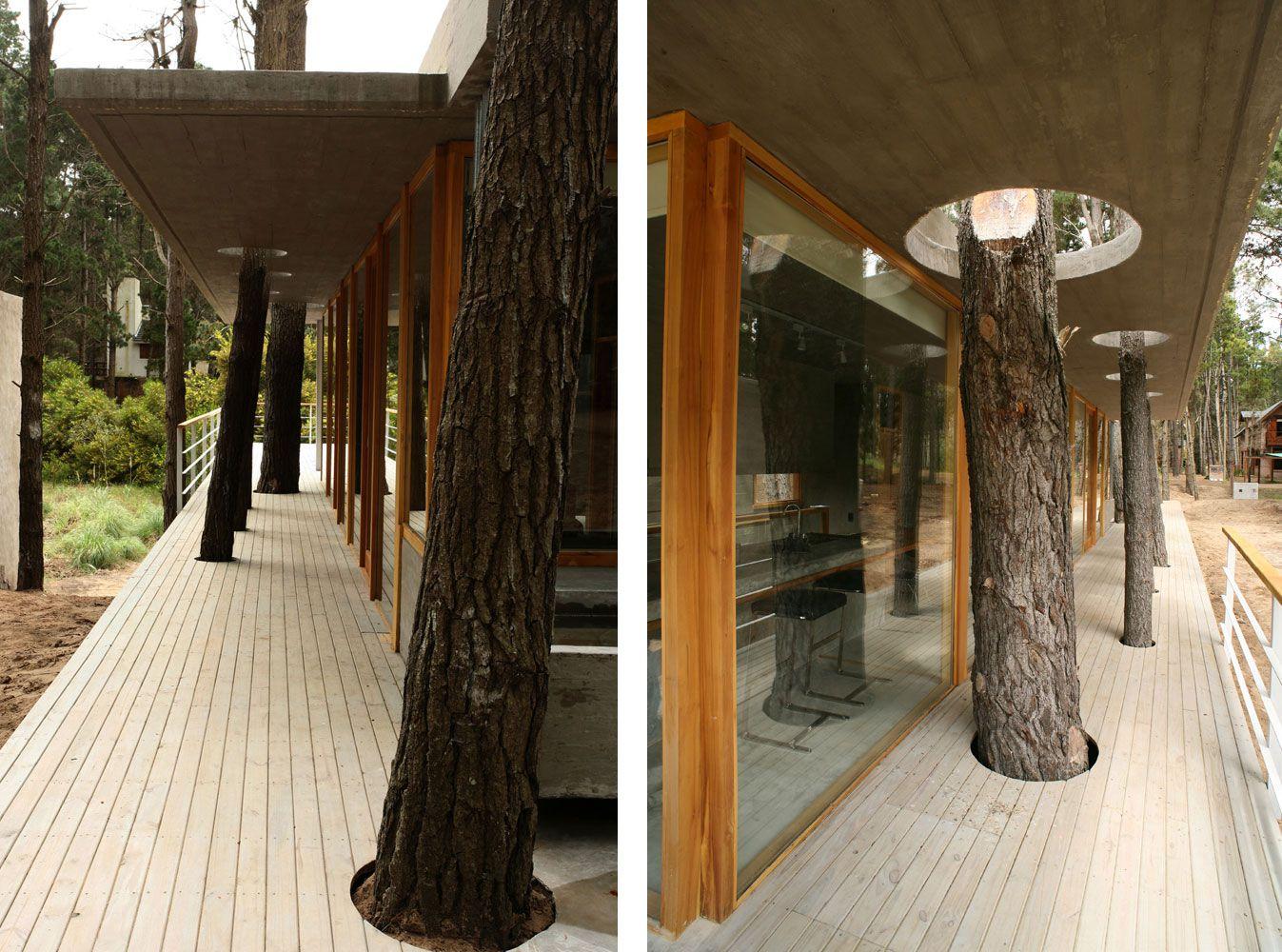 House-Among-Trees-05