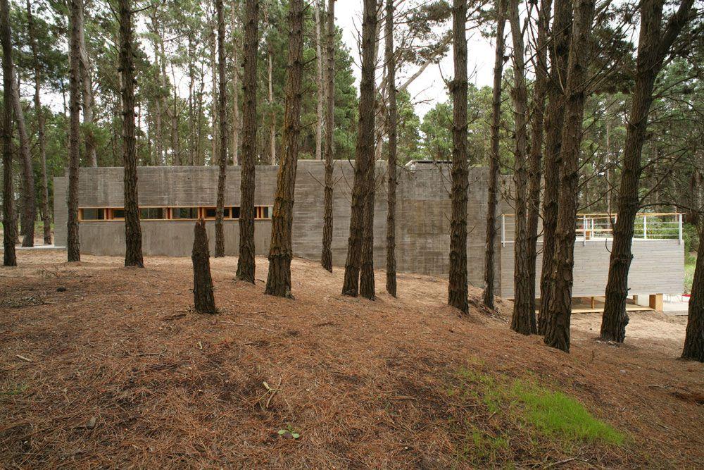House-Among-Trees-12
