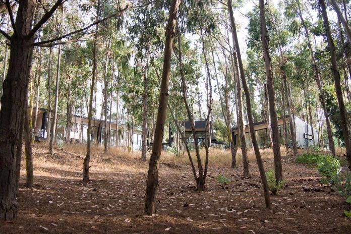 alfredo-comandari-design-aguas-claras-house-located-midst-eucalyptus-forestp-01
