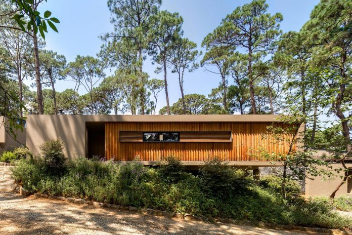 five-houses-project-dream-living-forest-dominated-ancient-pines-lush-vegetation-01