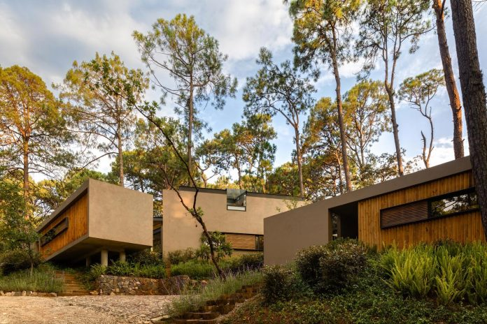 five-houses-project-dream-living-forest-dominated-ancient-pines-lush-vegetation-02