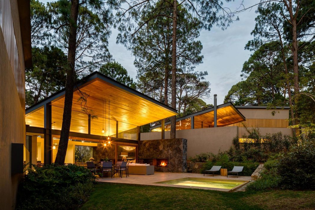 Five Houses project: dream of living in a forest dominated by ancient pines and lush vegetation
