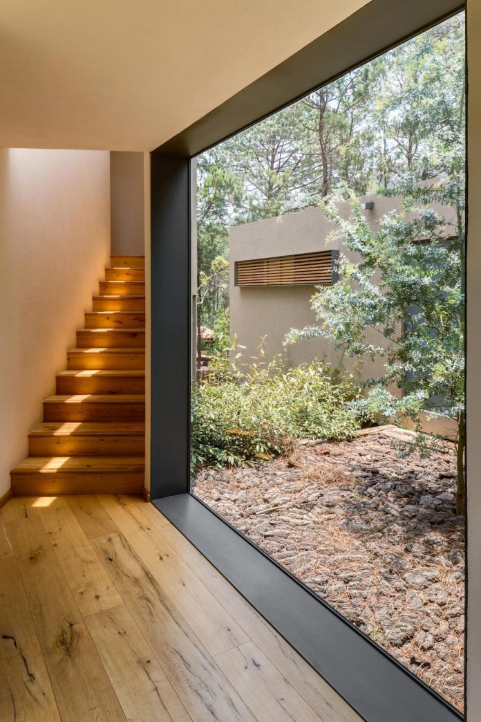 five-houses-project-dream-living-forest-dominated-ancient-pines-lush-vegetation-12