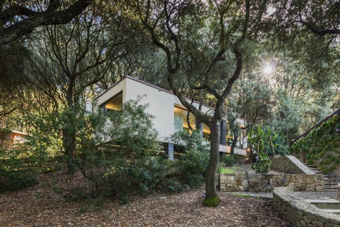 house-woods-simple-orthogonal-form-house-fits-perfectly-oak-forest-01