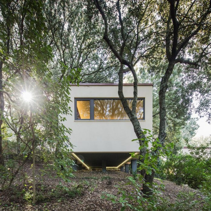 house-woods-simple-orthogonal-form-house-fits-perfectly-oak-forest-37