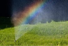 Irrigated Insights - How to Keep Your Lawn Lush Year Round