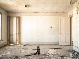 Pests That Will Mess Up Your Interiors