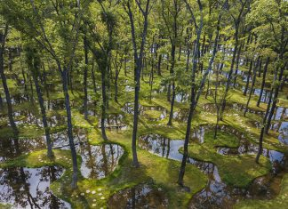 Art Biotop Water Garden Recognized with Inaugural Obel Award