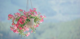 Cool and Fresh DIY Ways to Hang Plants Indoors