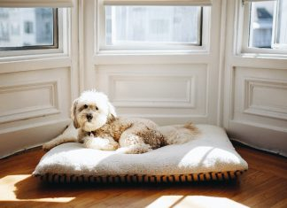 5 ways to have a clean house with pets