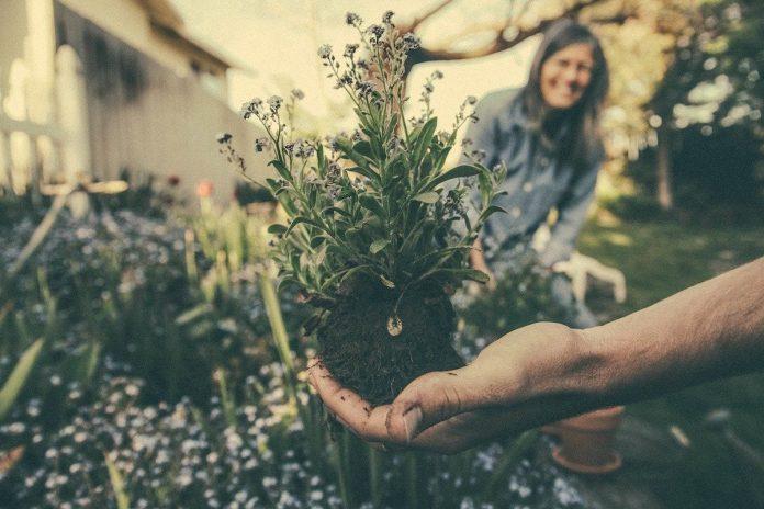 Create an Outdoor Garden Oasis