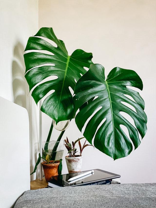 6 Ways to Make Your Home Feel Like a Tropical Paradise
