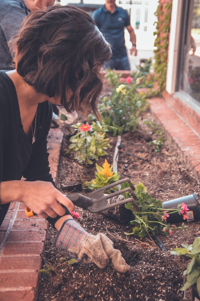Easy Tips to Start Gardening at Home