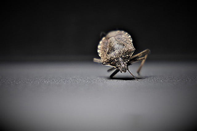 Have a Bedbug Problem? Here's the Solution