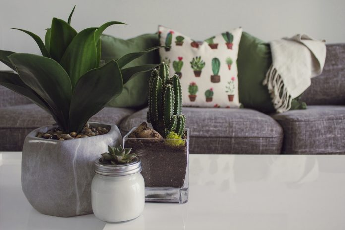 5 Quick Tips on Keeping Your Indoor Plants Healthy