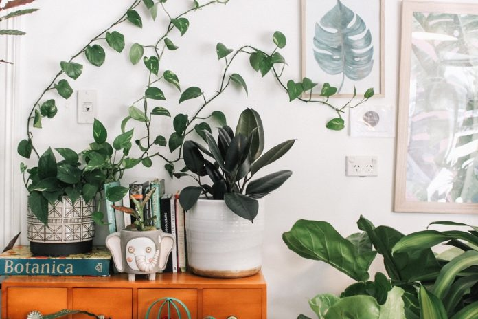 In-house Plants For Creating Your Personal Green Oasis at Home