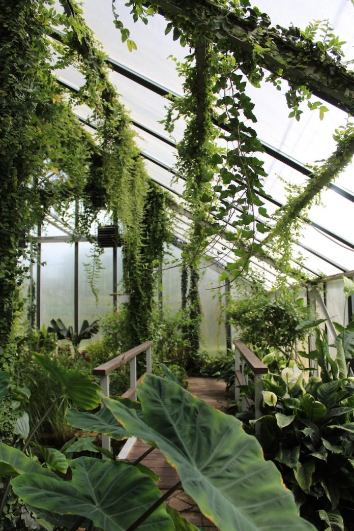 4 Things To Consider When Choosing The Best Greenhouse Glazing Material